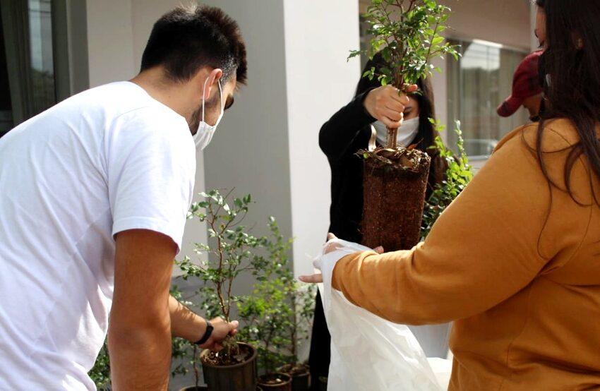 IAT troca mudas de jabuticaba por alimentos em ação social e ambiental em Pitanga